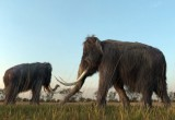 Mammut: gli ultimi si sono estinti per sete in Alaska
