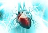 Cuore: l'arsenico presente nell'acqua ispessisce il ventricolo sinistro