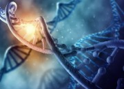 Cromosoma 2: forse alla base di sindrome di Down e tumori ematologici