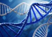 Scoperti i geni della longevità nei mammiferi