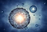 """Ricerca: funzionano le ovaie """"artificiali"""" coltivate in laboratorio"""