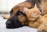 Diabete: anche cani e gatti ne sono colpiti
