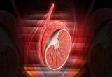 Tumore del testicolo: per la diagnosi precoce essenziale l'auto-palpazione