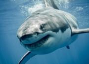 Parkinson: nuove speranze di cura dagli squali