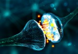 Scoperto il vero potenziale del cervello