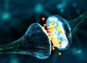 Cervello: scoperto come fissiamo i ricordi. Tutto avviene nel sonno