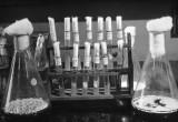 Antibiotici: tutto è cominciato 75 anni fa
