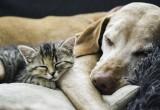 Non solo pet therapy: i cuccioli riducono allergie e obesità