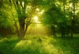 Più alberi vicino alle fonti di scarico, e le acque sono più sane