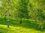 Stress: la cura è nel verde