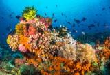 Dolore: una potenziale cura da un pesce tropicale