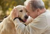 Pet therapy nelle case di riposo: bene, ma con qualche accorgimento