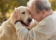 Benessere: il cane è il miglior personal trainer dopo i 70 anni