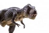 Niente piume per il T-Rex, solo squame