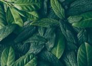 Gas serra: emissioni anche da foglie in decomposizione