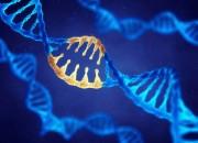 Presentate due nuove tecniche per riparare errori genetici