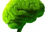 """Piante come il cervello: """"crescono"""" allo stesso modo"""