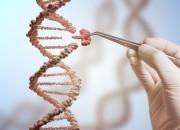 Dna: utilizzata con successo tecnica Crispr su embrioni umani
