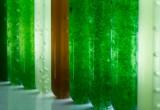 Antiossidanti dalle microalghe: al via studio internazionale su nuove tecniche