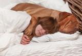 Sonno: dormire con il proprio cane infonde sicurezza