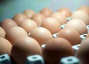 Mangiare un uovo al giorno non provoca cardiopatie
