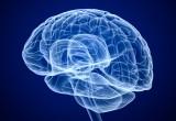 Cervello: quello di lui e quello di lei viaggiano a velocità differenti