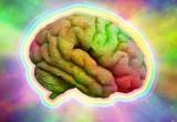 Il cervello sente le stagioni: in estate e autunno è più smart