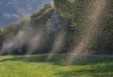 I moscerini danzano davvero: i loro movimenti nello sciame non sono casuali