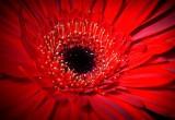 Svelato il trucco dei fiori per attirare le api