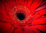 Insetti: i fiori li attraggono anche con il calore