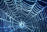 La forza bruta del ragno facchino