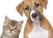 Eterna lotta cane-gatto. Il migliore amico dell'uomo ha il doppio dei neuroni del compare felino