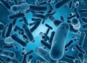 Scambio di geni tra batteri: nel corpo umano è più facile