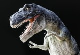 "Zecche: anche i dinosauri dovevano ""combatterci"""