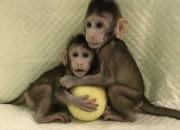 Prime scimmie clonate. Si apre una nuova era della medicina