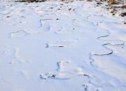 Lo scioglimento del ghiaccio marino minaccia il permafrost