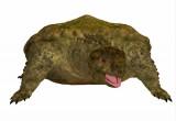 Tartarughe: anche il loro cervello è lento?