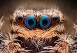L'antenato del ragno aveva la coda