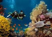 Sub. Da otiti a raffreddore, ecco nuove linee guida per immergersi in sicurezza