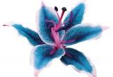 I primi fiori della Terra sono apparsi tra 149 e 256 milioni di anni fa