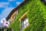 """Una """"coperta verde"""" per case più fresche e bollette meno care"""
