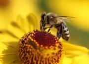 Dalle api una possibile cura contro l'eczema