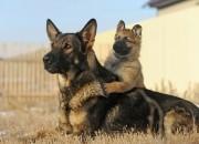 I cuccioli imparano dai grandi… anche umani