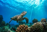 L'antenata della tartaruga era senza carapace