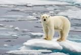 Sesta estinzione di massa: nel mirino i mammiferi