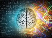 Cervello: studiare cose nuove tutte insieme rende giovani