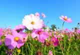 I primi fiori sbocciati sulla Terra hanno 180 milioni di anni