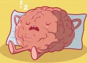 Il cervello fa 'le pulizie' durante il sonno