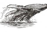 Balene: le antenate avevano quattro zampe