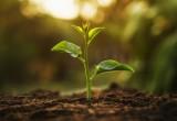 Scoperto come le piante resistono al caldo torrido